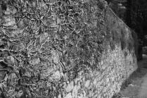 Ivy on Moltrasio stone