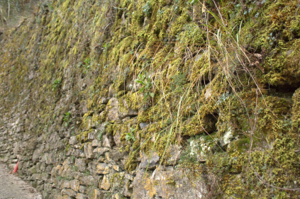 Moss on Moltrasio stone