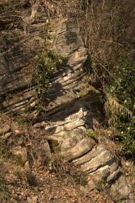 vegetation and strata