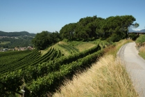 Castel San Pietro - Vineyards
