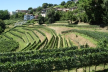 Vacalla - Vineyards