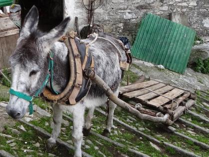 Donkey and sledge