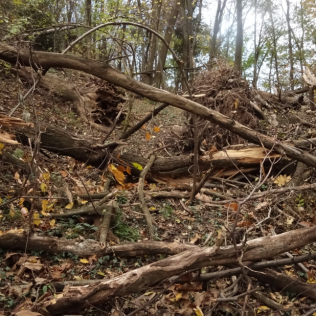 These fallen trees provide a challenge along your route but ar to be found only in one area