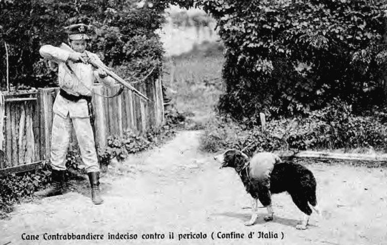 Dog smugglers